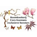 Boomkwekerij-Cees-Koemans
