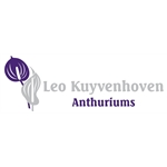 Leo-Kuyvenhoven-Anthuriums