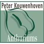 Peter-Kouwenhoven-Anthuriums