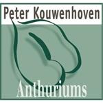 Peter-Kouwenhoven-Anthuriums