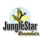 JungleStar-Bromelia's