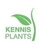 Kennisplant