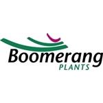 Boomerang Plants