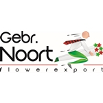 Gebr-Noort-flowerexport