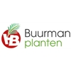 Buurman-Plantenexport-BV