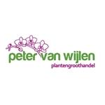 Peter-van-Wijlen-vof