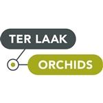 Ter-Laak-Orchids-Multiflora
