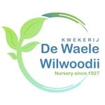 De-Waele---Wilwoodii