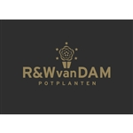 RenW-van-Dam-Potplanten