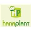 Hanaplant