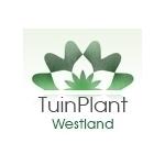 Tuinplant-Westland