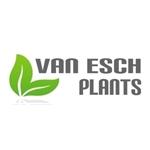 Van-Esch-Bloemen-en-Planten