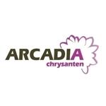 Arcadia-Chrysanten
