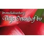 Bromeliakwekerij-Thijs-Ottenhof-bv