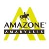 Amazone-Amaryllis
