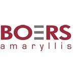 Boers-Amaryllis