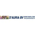 D'Auria-BV