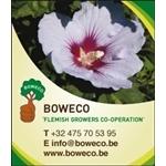 BOWECO-cvoa