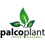 Palcoplant-SL