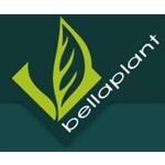 Bellaplant-Nederland-BV