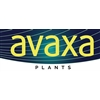 Avaxa-Plants-BV-(StolkerPlants)
