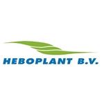 Heboplant