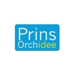 Prins-Orchidee