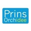 Prins-Orchidee