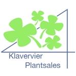 Klavervier Plantsales