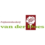Van-der-Does