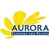Aurora-Flowers-bv