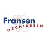 Fransen-Orchideeën