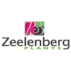 Zeelenbergplants