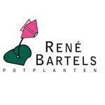 René-Bartels-Potplanten