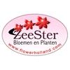 Zeester-bloemen-en-planten-bv