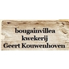 Geert-Kouwenhoven-Bougainvilleas