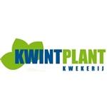 Kwintplant
