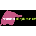 LJ-Noordam