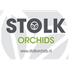 Collections-by-Stolk-Orchids