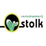Cactuskwekerij-Stolk