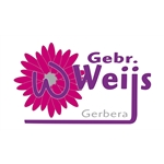 The-Gerbera-House