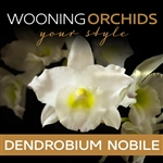 Wooning-Orchids