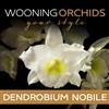 Wooning-Orchids--Dendrobium-nobile