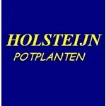 Kees-van-Holsteijn