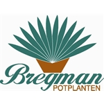 Bregman-potplanten