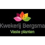 Vaste-plantenkwekerij-Bergsma