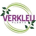 Verkleij-Plants