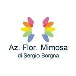 Az-Floricola-Mimosa-di-Sergio-Borgna