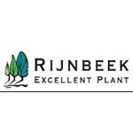 Rijnbeek-Excellent-Plant