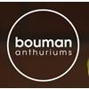 Xanthu-Bouman-Anthuriums